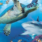 Seallife turtle and shark
